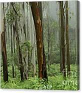 Australia Enchanted Forest Canvas Print