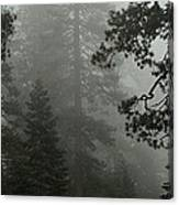 Enchanted Forest Cropped Canvas Print