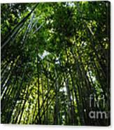 Enchanted Forest Haleakala National Park Canvas Print