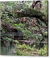 Enchanted Forrest IIi Canvas Print