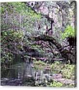 Enchanted Forrest Iv Canvas Print
