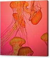 Enchanted Jellyfish 3 Canvas Print