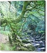 Enchanted Leprechaun Forest Canvas Print