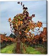 End Of The Vineyard Row Canvas Print