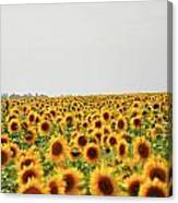 Endless Field Of Dreams Canvas Print