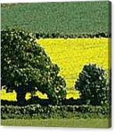 English Field Of Yellow 2 Canvas Print