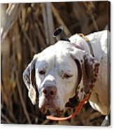 English Pointer On Point - D004001 Canvas Print