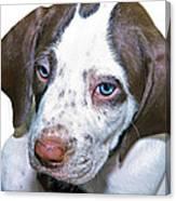 English Pointer Puppy Canvas Print