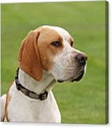 English Pointer Canvas Print