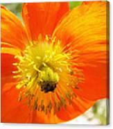 Enter The Orange Poppy Canvas Print