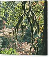 Epiphytic Moss Canvas Print