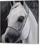 Equestrian Silver Canvas Print