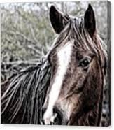 Equine Trance Canvas Print