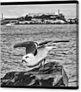 Escape From Alcatraz Canvas Print