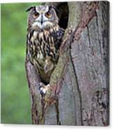Eurasian Eagle-owl Bubo Bubo Looking Canvas Print