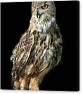 Eurasian Eagle Owl  Canvas Print