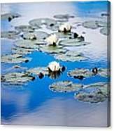 European White Waterlily Canvas Print