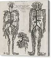 Evelyn Table Blood Vessels, 17th Century Canvas Print