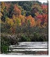 Even Swamps Have Beauty Canvas Print