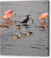 Evening Activity In The Bay Canvas Print