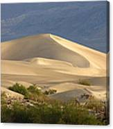 Evening Dune Canvas Print