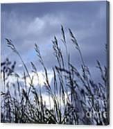 Evening Grass Canvas Print