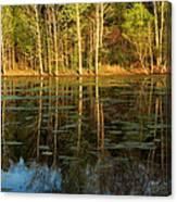 Evening Light On A Missouri Pond I Canvas Print