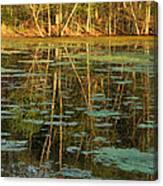 Evening Light On Missouri Pond 2 Canvas Print