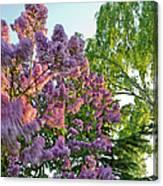 Evening Lilac Canvas Print