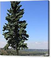 Evergreen Tree Beside The River Canvas Print