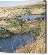 Exmoor Blanket Bog Canvas Print
