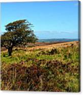 Exmoor's Heather-covered Hills Canvas Print