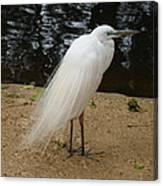 Exotic Bird Canvas Print