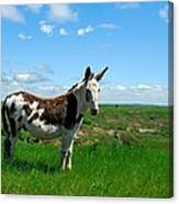 Exotic Mule In Montana Canvas Print
