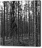 Exspruce Canvas Print