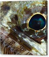Extreme Close-up Of A Lizardfish Canvas Print