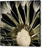Extreme Close-up Of The Seedhead Canvas Print