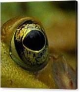 Eye Of Frog Canvas Print