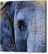 Eye Of The Elephant Canvas Print