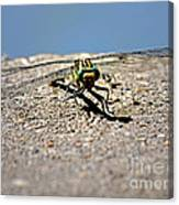 Eye To Eye With A Dragonfly Canvas Print