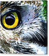 Eyes Of Owl's 19 Canvas Print