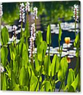 Fabulous Water Hyacinth  Canvas Print