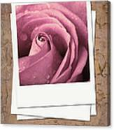 Faded Rose Photo Canvas Print
