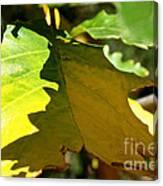 Fading Into Fall Canvas Print