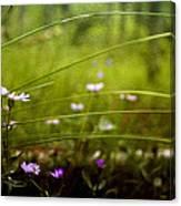 Fairy Meadow Canvas Print