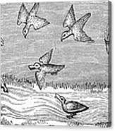 Falconry, 14th Century Canvas Print