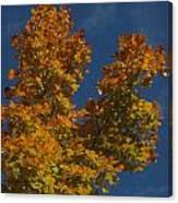 Fall 23 Canvas Print