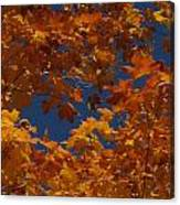 Fall 25 Canvas Print