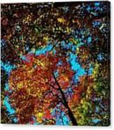 Fall Arrives ... Canvas Print