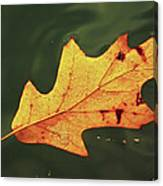 Fall Away Canvas Print